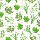 Fond sans couture d'illustration d'herbes avec le basilic, la sauge, le romarin, et le persil sur le fond de point de polka Photo stock