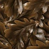 Fond sans couture de feuilles de chute de chêne photographie stock libre de droits