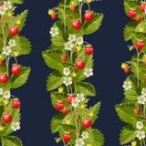 Fond sans couture de fraisiers communs Photographie stock libre de droits