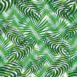Fond sans couture de modèle de tropiques Feuilles tropicales exotiques modernes, modèle de contexte avec les lignes sans couture  illustration de vecteur