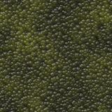 Fond sans couture de texture de cellules abstraites. Images libres de droits