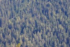 Fond sans couture de texture de modèle de forêt Images stock