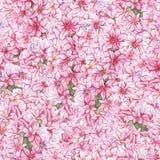 Fond sans couture de texture de modèle de jacinthe d'aquarelle de fleur d'usine rose de nature illustration libre de droits
