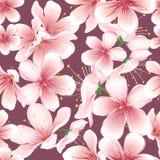 Fond sans couture des fleurs de cerisier Image stock