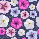 Fond sans couture des fleurs de pétunia photos libres de droits