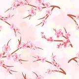 Fond sans couture - fleurs de cerisier Branches des blos d'une cerise Images stock