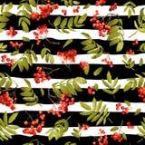 Fond sans couture saisonnier de sorbe de chute Autumn Pattern floral avec des feuilles et des baies Images stock