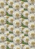 Fond sans couture vert avec de grandes roses blanches Photo libre de droits