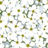 Fond sans joint avec de petites fleurs blanches. illustration stock