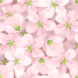 Fond sans joint avec des fleurs de pomme. Photo stock