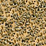 Fond sans joint d'abeilles. Photo stock