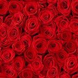 Fond sans joint de roses Image libre de droits