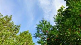Fond scénique de parc avec les cieux bleus un jour d'automne banque de vidéos