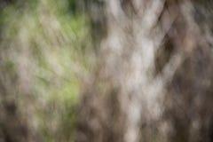 Fond sec de brindilles de tache floue Images libres de droits