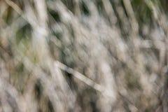 Fond sec de brindilles de tache floue Images stock