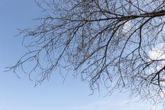 Fond sec de ciel de branche d'arbre Photographie stock libre de droits