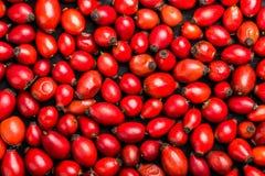 Fond sec de cynorrhodons, antioxydant puissant avec le contenu élevé de la vitamine photos stock