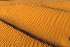 Fond sec de désert Photographie stock
