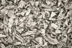 Fond sec de feuilles de chute photo libre de droits