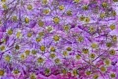 Fond sec de fleur Image libre de droits
