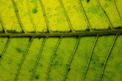 Fond sec de texture de feuille Photos stock