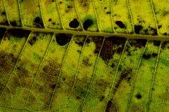 Fond sec de texture de feuille Image libre de droits