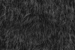Fond sec monochrome d'herbe de paille, texture de foin après havest photo stock