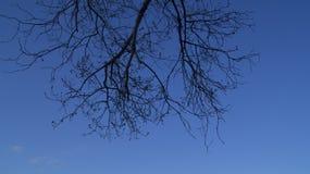 Fond, silhouette d'un arbre embranché contre un ciel bleu au printemps image libre de droits