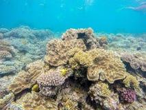 Fond sous-marin Photos stock