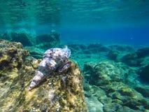 Fond sous-marin d'espèce marine Photos libres de droits