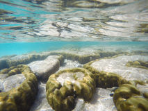 Fond sous-marin sous-marin de récif coralien Image libre de droits
