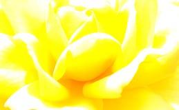 Fond surexposé de rose de jaune photo libre de droits