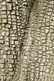 Fond/texture de Treebark de genévrier d'alligator Photos libres de droits
