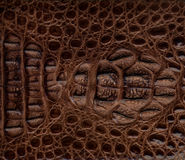 Fond texturisé de cuir de crocodile Images libres de droits