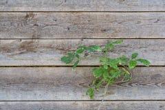 Fond texturisé de mur en bois Photographie stock libre de droits