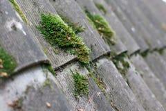 Fond texturisé de vieilles feuilles de toit d'amiante Photographie stock