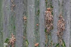 Fond texturisé de vieilles feuilles de toit d'amiante Photo stock