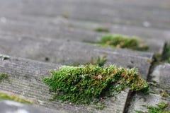 Fond texturisé de vieilles feuilles de toit d'amiante Photos stock