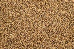 Fond texturisé des grains de sarrasin image stock