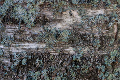 Fond texturisé en bois avec de la mousse Images libres de droits