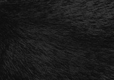 Fond texturisé noir pour le papier peint photos libres de droits