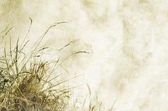 Fond texturisé avec des herbes et espace pour le texte Photographie stock