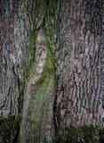 Fond texturis? en bois avec la texture verte de mousse images stock