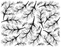 Fond tiré par la main d'Autumn Oak Leaves illustration stock