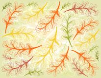 Fond tiré par la main d'Autumn Oak Leaves illustration libre de droits