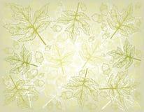 Fond tiré par la main des écrous d'Autumn Maple Leaves et de chêne illustration de vecteur