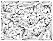 Fond tiré par la main des fruits chinois de date illustration stock