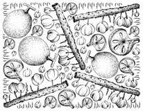Fond tiré par la main des fruits de groseille à maquereau de Bael et d'Otaheite illustration de vecteur