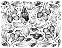 Fond tiré par la main des fruits de Luk Rakam et de jujube illustration libre de droits
