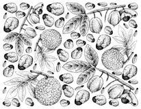 Fond tiré par la main des fruits et des fruits à pain d'Ackee Illustration de Vecteur